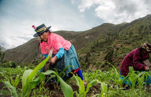 Elecciones 2021: Piden a candidatos ofrecer soluciones para mejorar la alimentación en el país